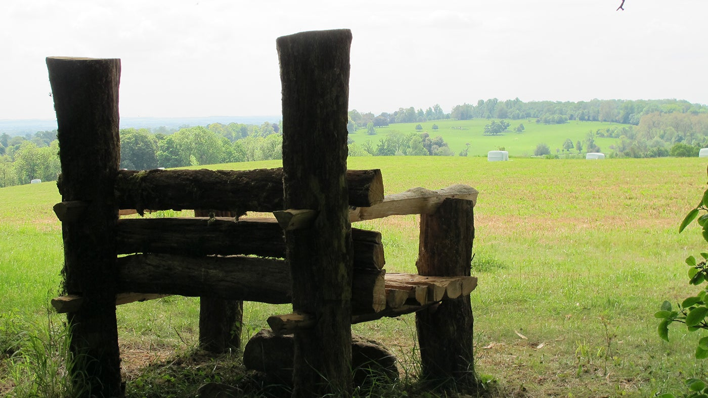 Wimpole Woodland Throne