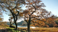 Autumnal colours over Loe Pool at Penrose