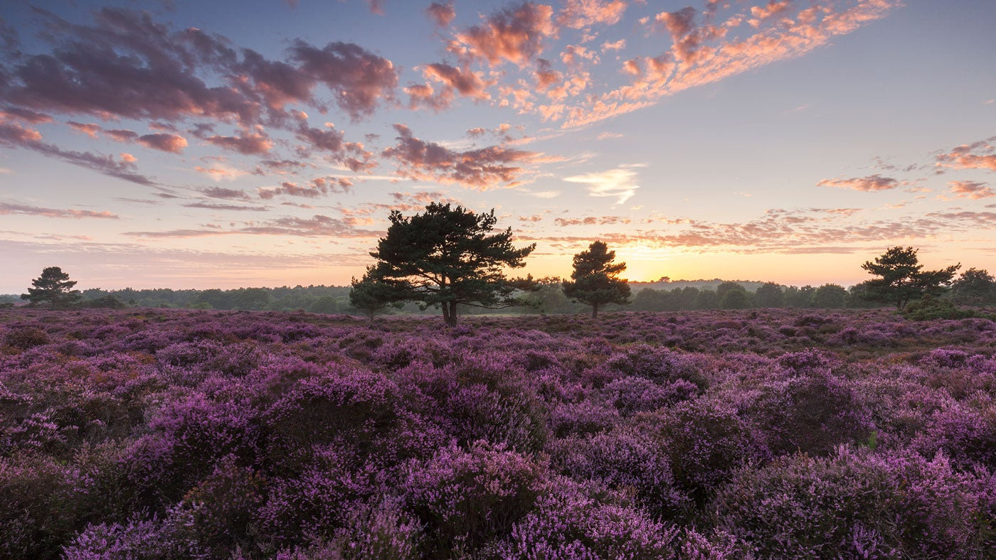 Coastal heathland in Dunwich