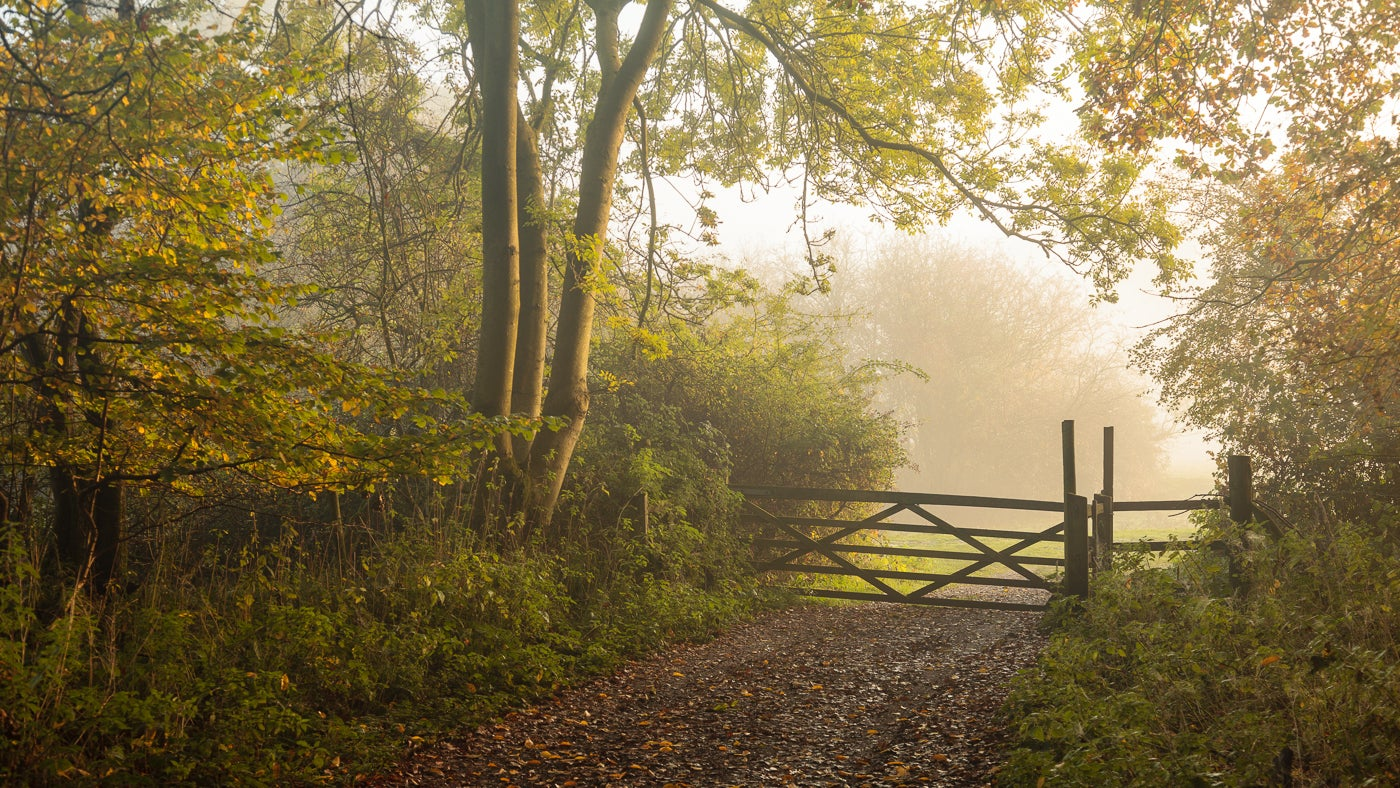 A gate across a track in Hatfield Forest, with autumn mist