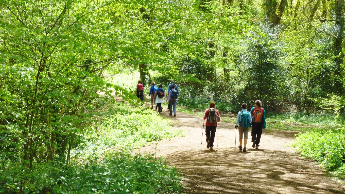 A group of walkers pass below the beeches in Borthwood Copse
