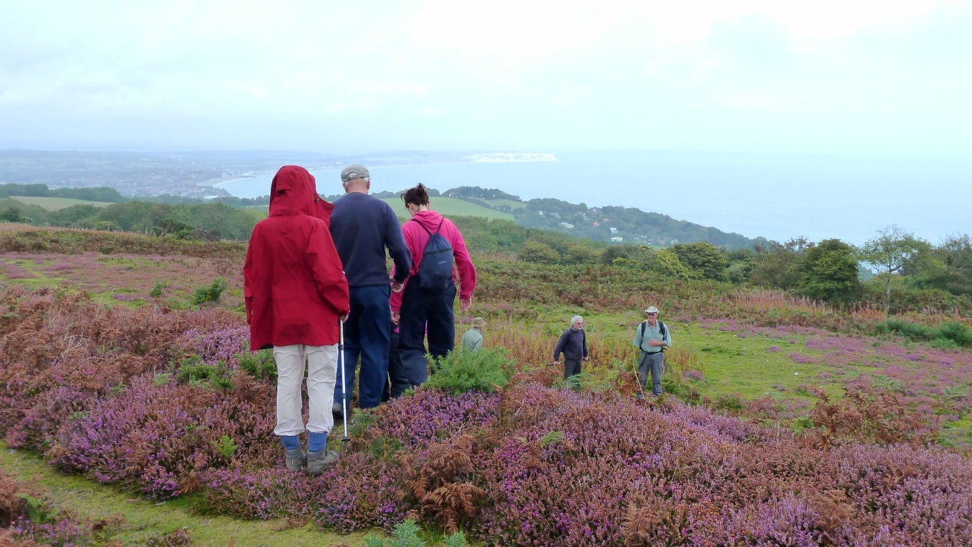 A ranger-led walk over Luccombe-down through the purple heather