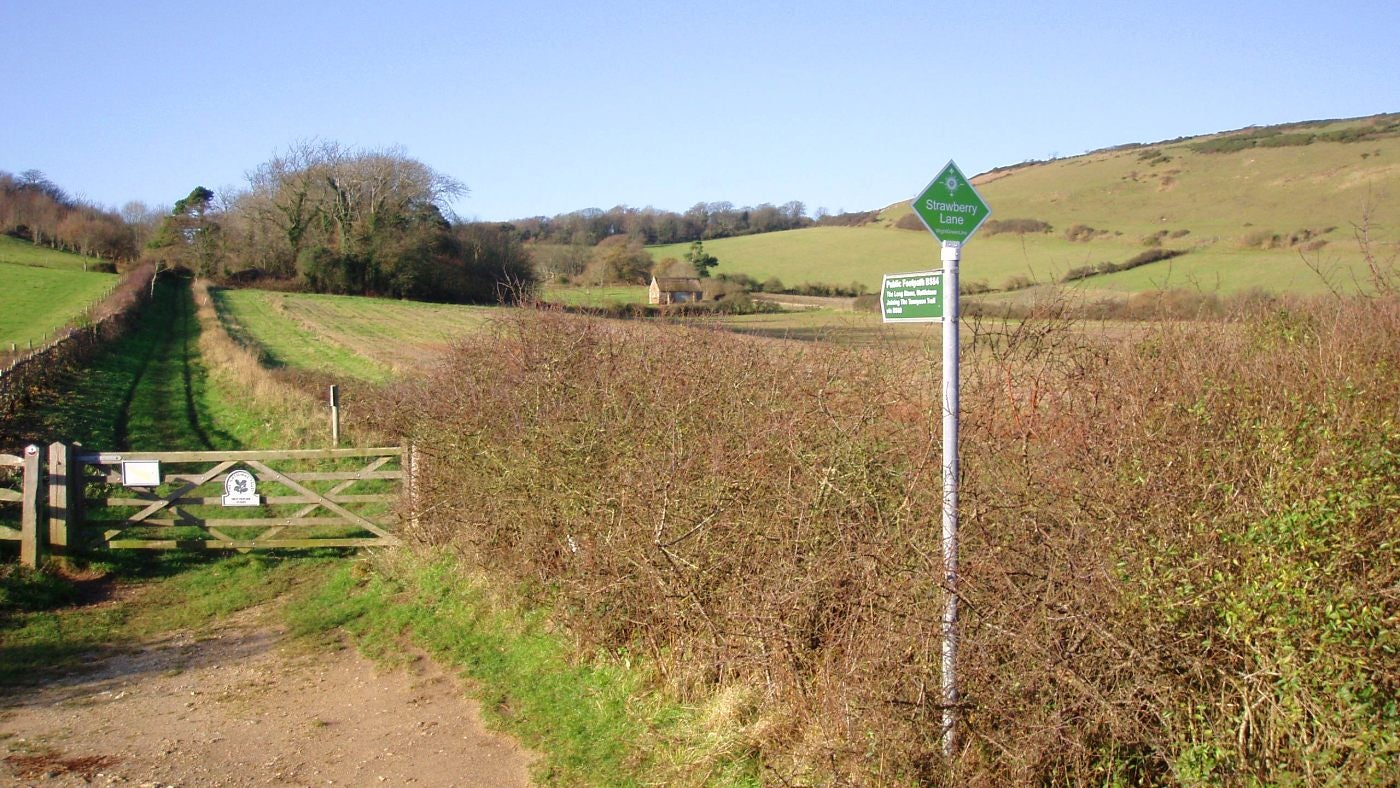 An inviting track leads from the lane towards the Long Stone at Mottistone