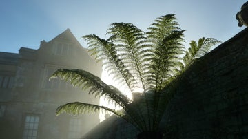 A misty morning view of Canons Ashby's ferns