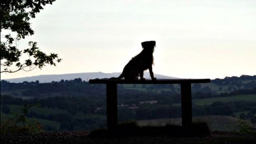 A dog enjoys the views from Kinver Edge