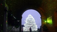 A lady standing in front of a giant Christmas tree
