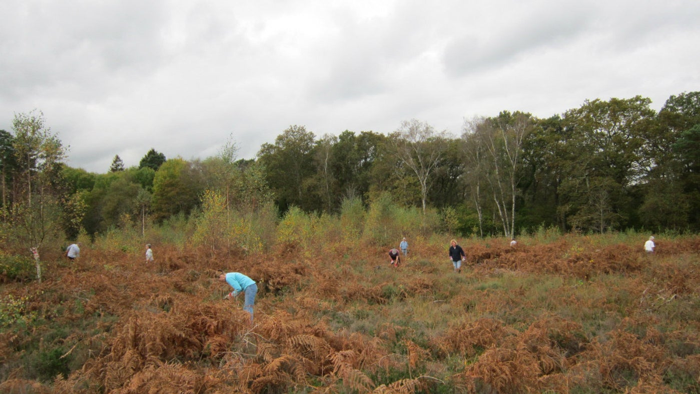 A volunteer group in the bracked on the common