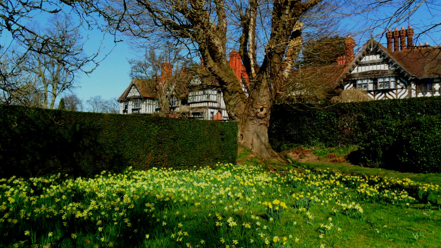 A corner of the garden at Wightwick Manor with daffodils in front of the house