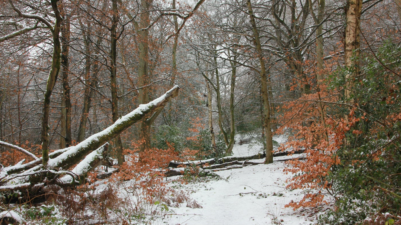 snowy scene in the Quarry Bank woods