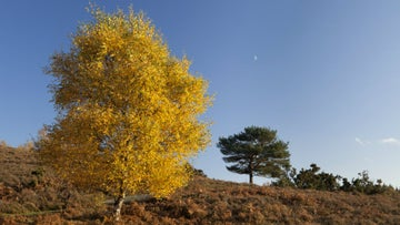 Autumn trees at Hale Purlieu Common, New Forest, Hampshire