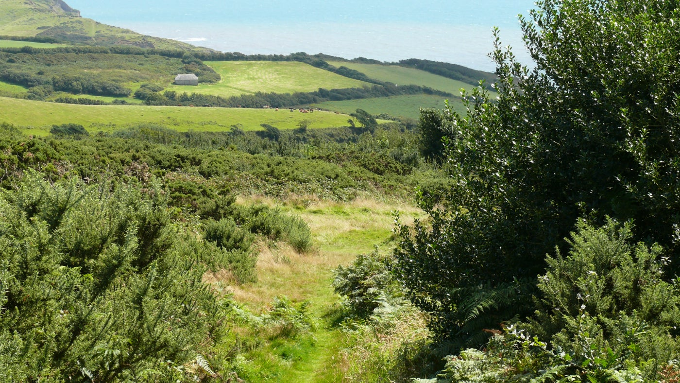 A footpath at Stonebarrow on the Golden Cap Estate