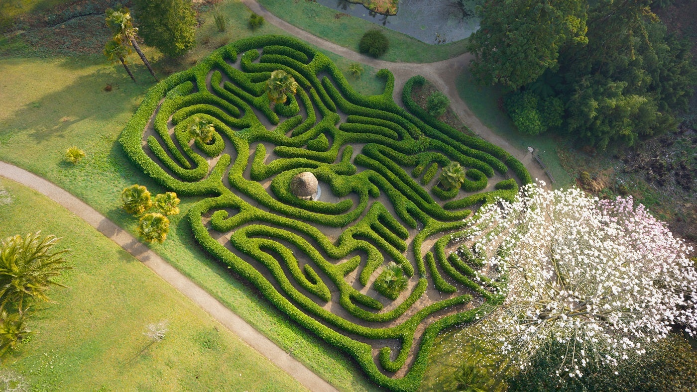 The wavy hedges of Glendurgan maze in Cornwall seen from above