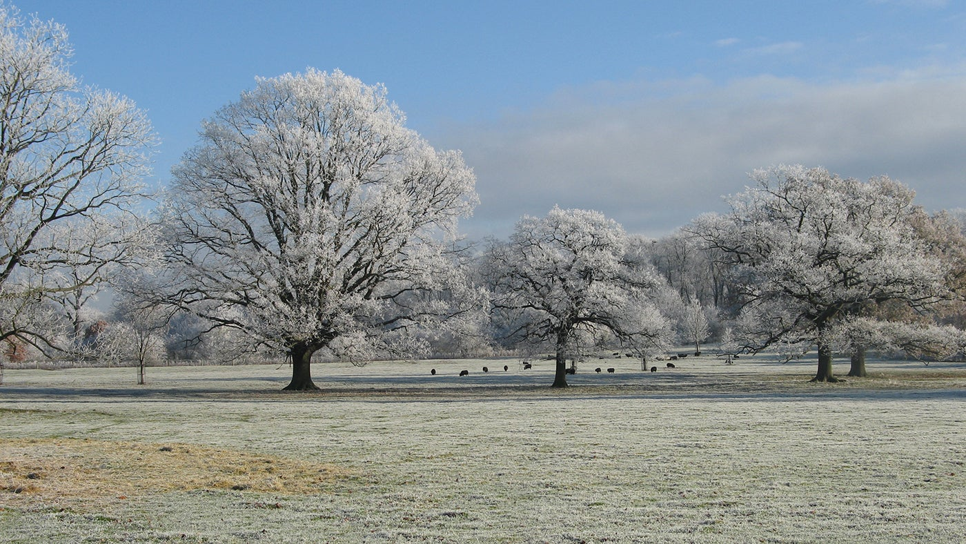 The parkland clothed in a winter frost