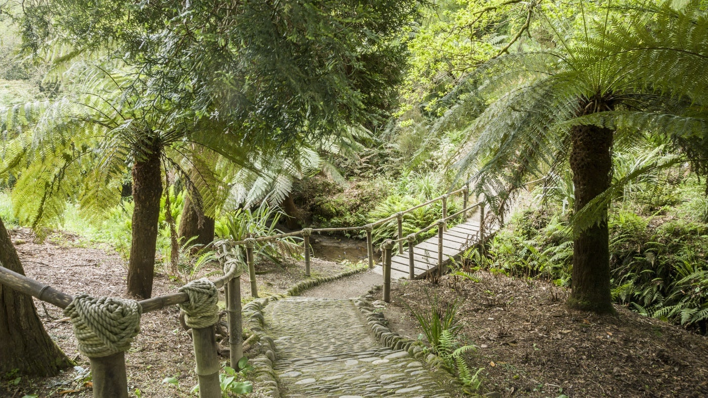 A path leads to a wooden and bamboo bridge crossing a stream in an exotic part of Glendurgan garden in Cornwall