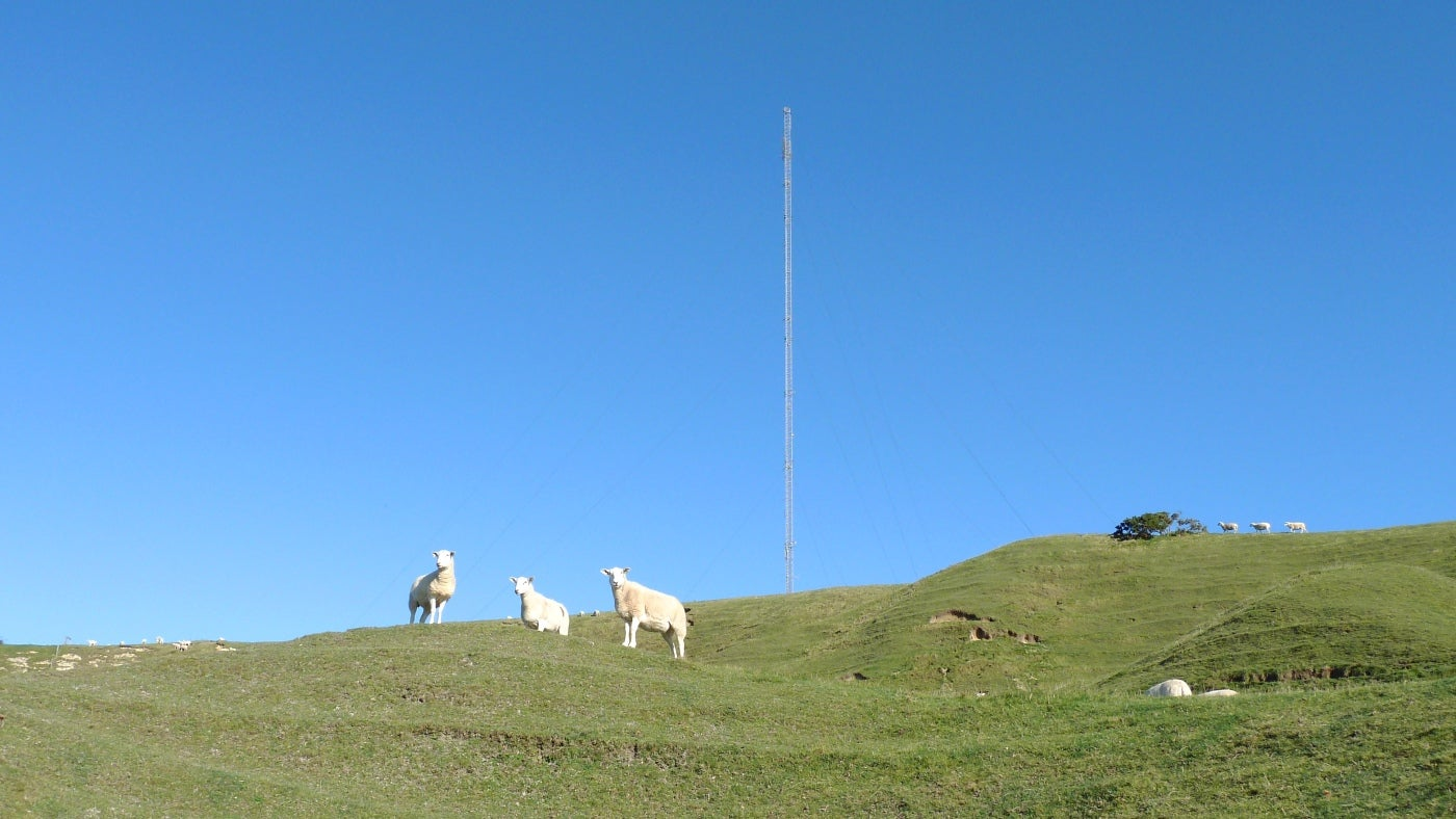 Sheep enjoy the pasture high up on Chillerton Down on the Isle of Wight