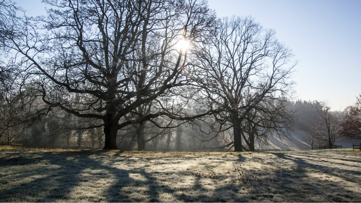 Sunshine through the trees on a frosty winter day