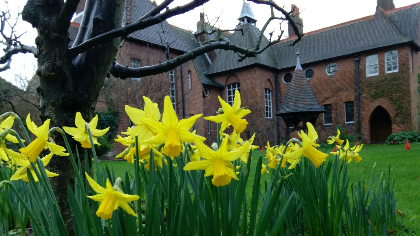 Daffodils in Red House Garden