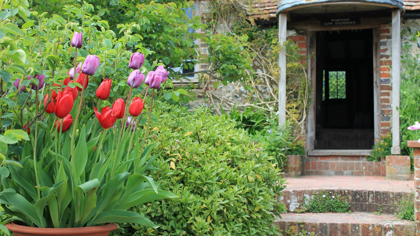 Pot of Tulips on terrace at Alfriston Clergy House