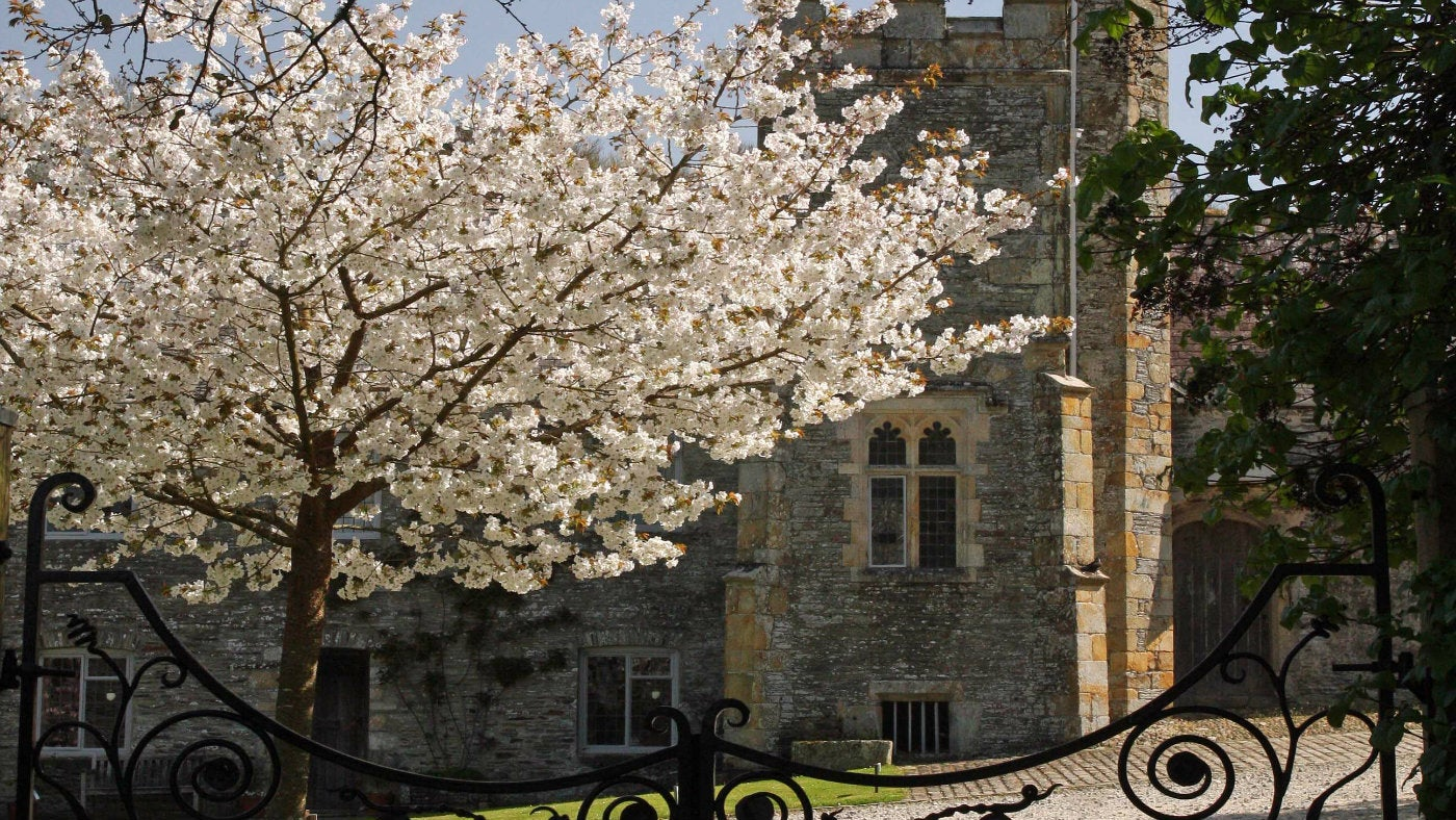 A blossoming tree outside the cottages on the Buckland Abbey estate
