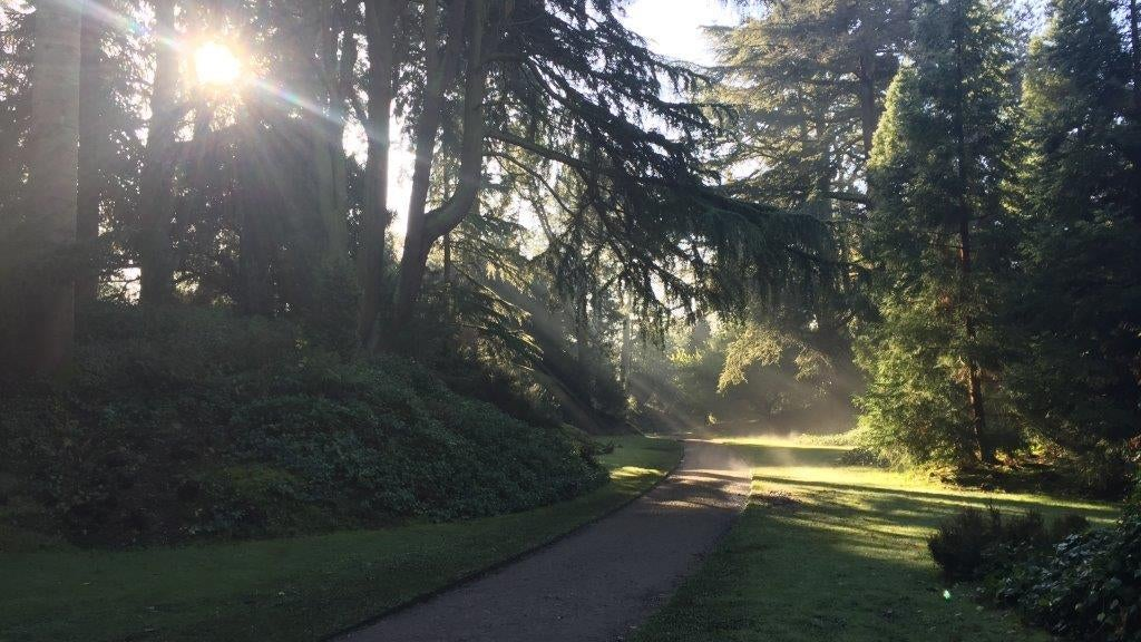 Morning sunlight through the trees in the Pinetum