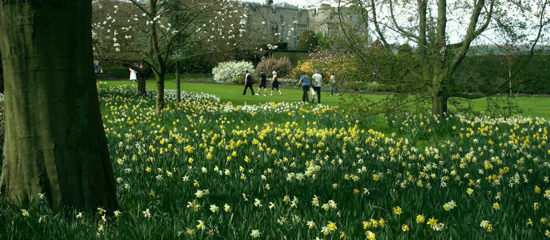 Find the signs of spring at Chirk Castle | National Trust