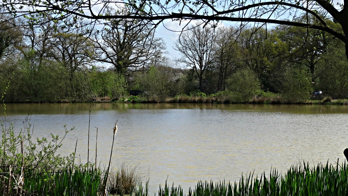Fourwents Pond at Holmwood Common