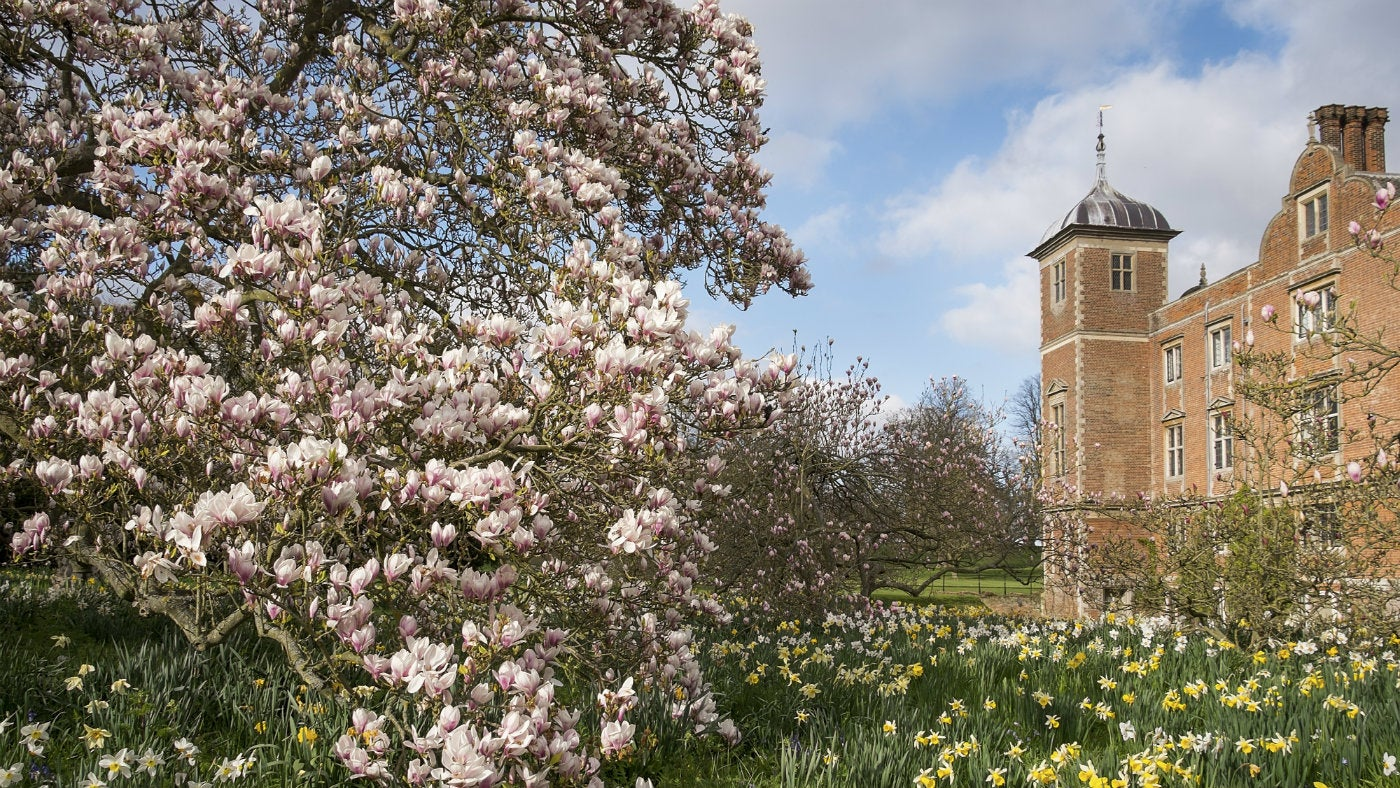 Blickling blossom and daffodils in spring