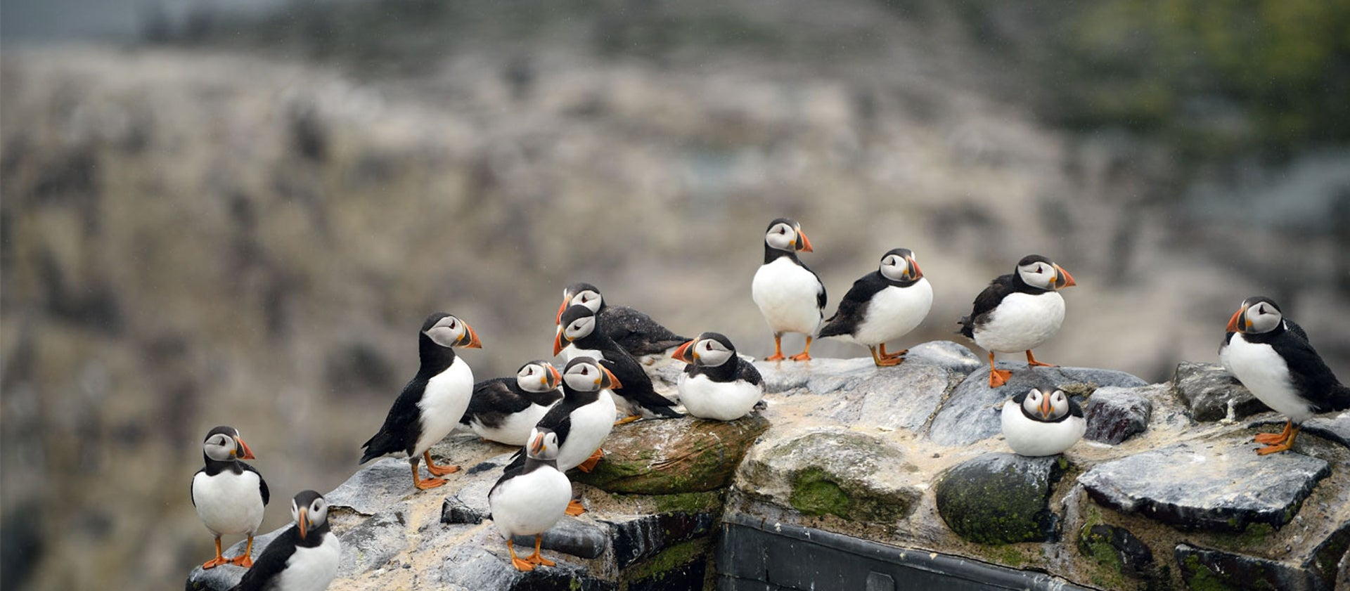 Farne Islands | National Trust