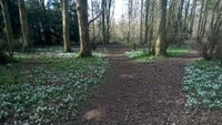 Snowdrops at Badbury Hill, Oxfordshire