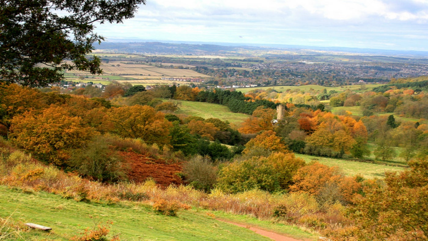 Landscape view of autumnal trees