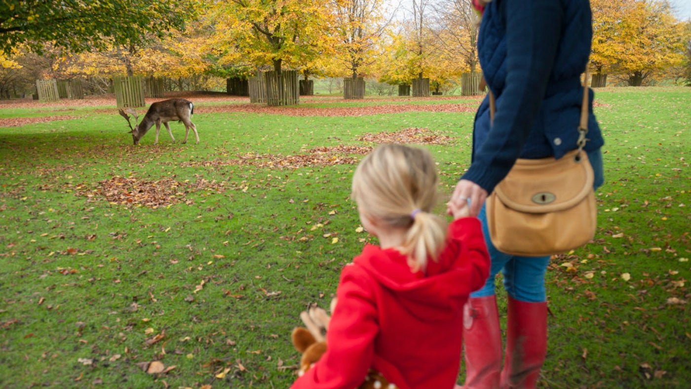 Mum and child looking at a deer in the park at Dunham Massey