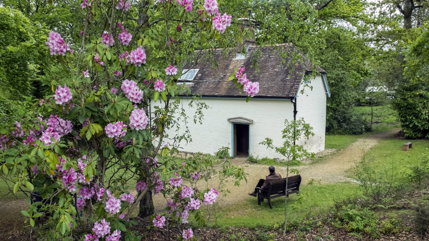 An external view of the white cottage of Clouds Hill on a sunny day in May with pink rhododendrons in bloom in the foreground