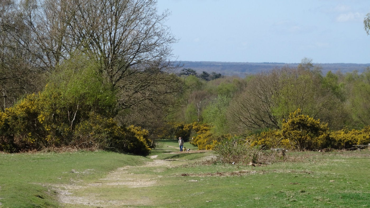 Paths on Headley Heath