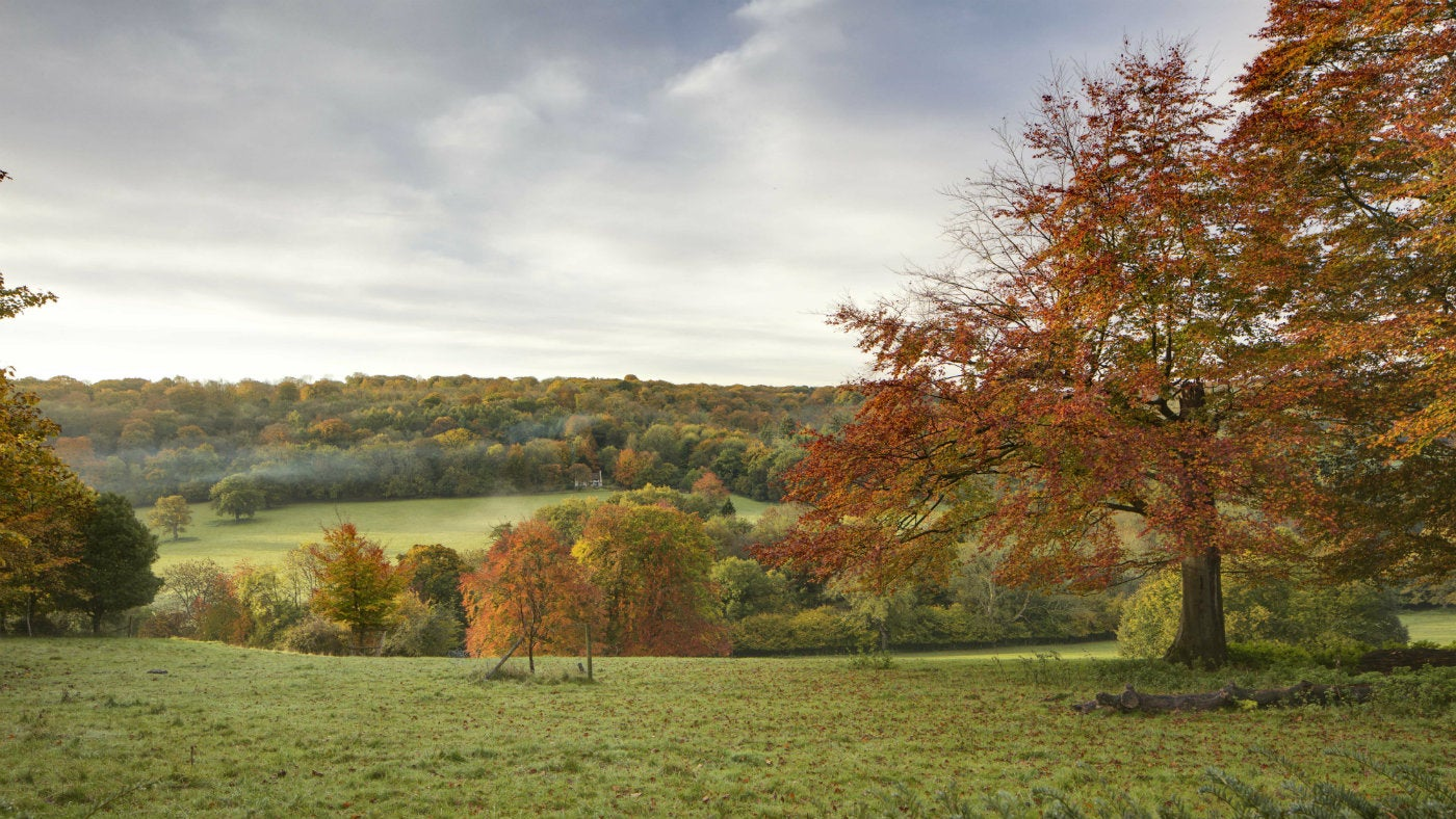 A beautiful autumn landscape full of autumn colour