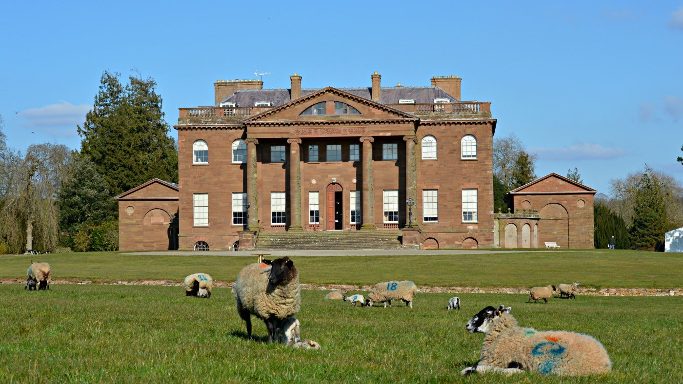 Lambs in the park by the mansion