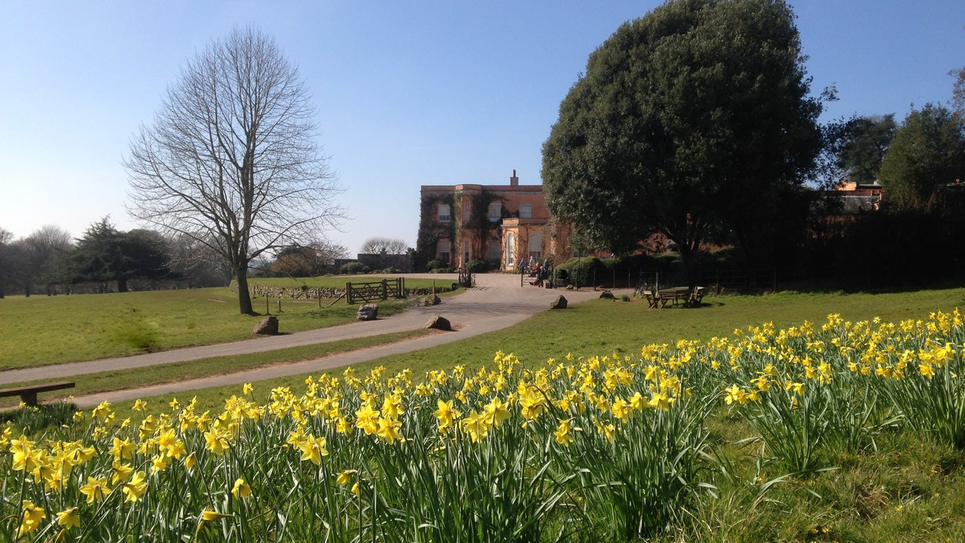 See the spring flowers burst into life at Killerton, Devon