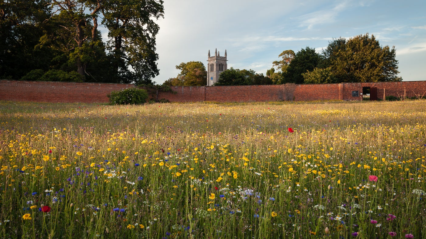 Seasonal meadow in flower with the church in the distance