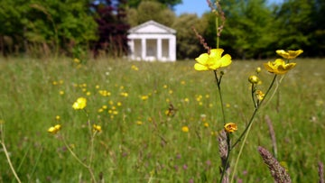 Temple with close up of buttercups