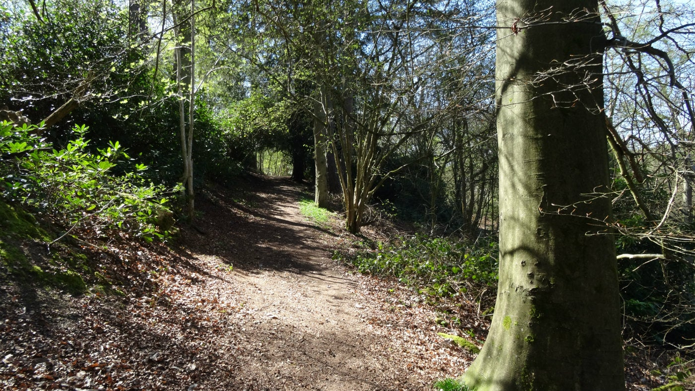 Shady paths at Abinger Roughs