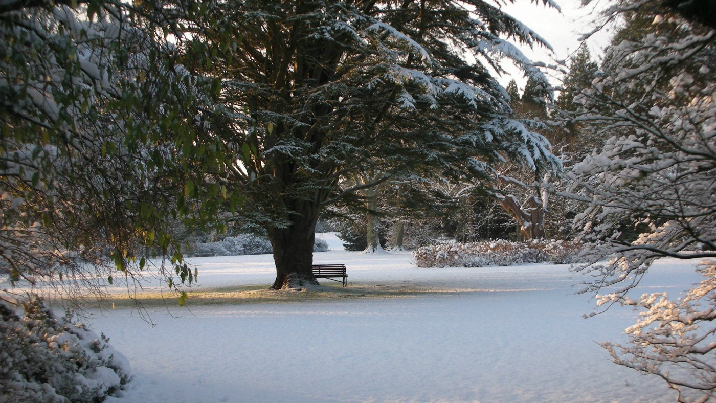 Snow in the West Indies garden at plas Newydd