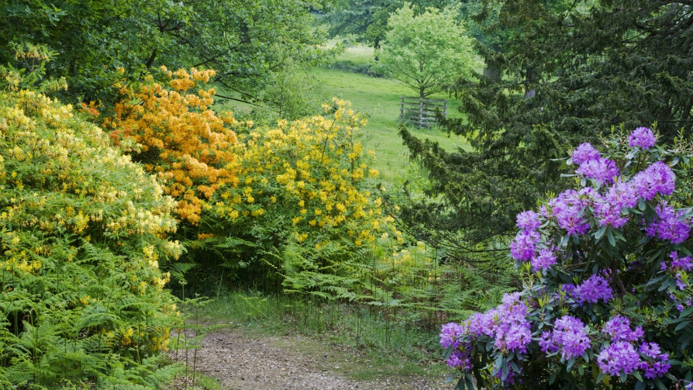 Spring Gardens And Countryside To Visit In Surrey