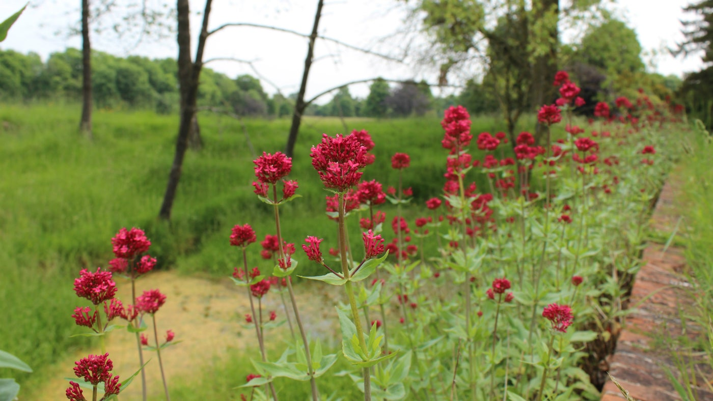 Red flowers in front of the estate at Greys Court