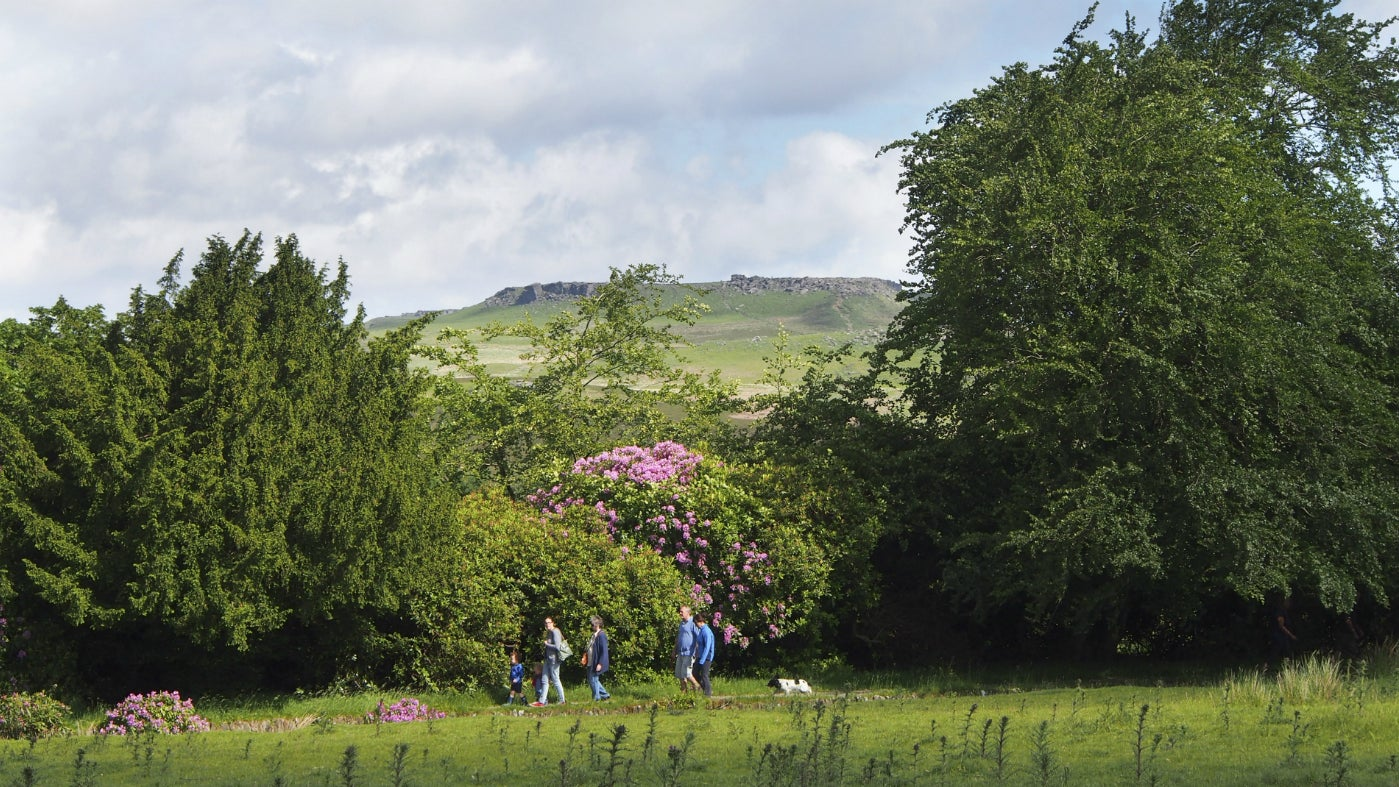 Family walks past rhododendrons