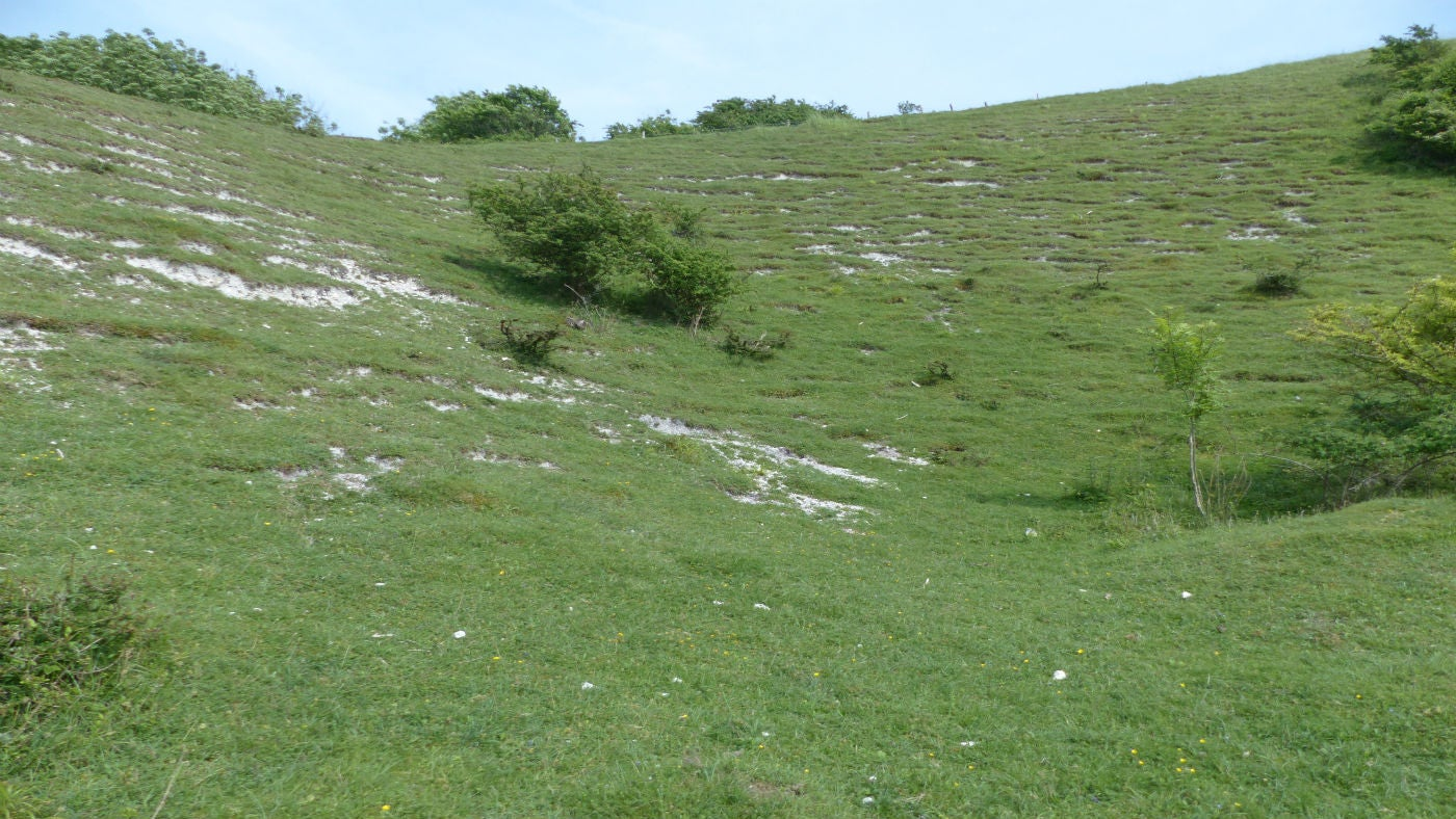 A view of the old chalk pits at Ditchling Down