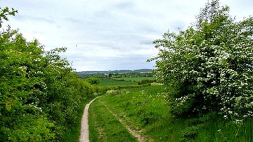 Section of the Icknield way