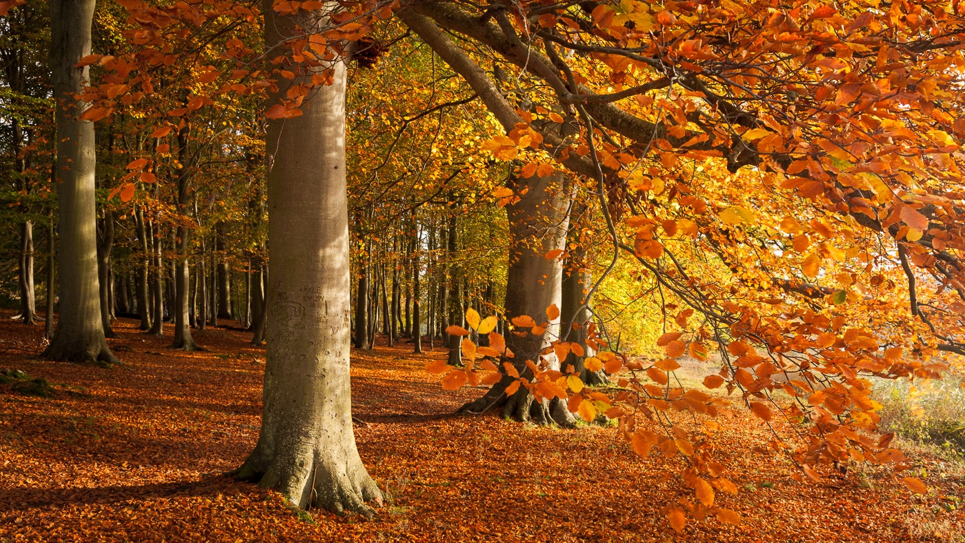 Blickling woodland filled with autumn colour