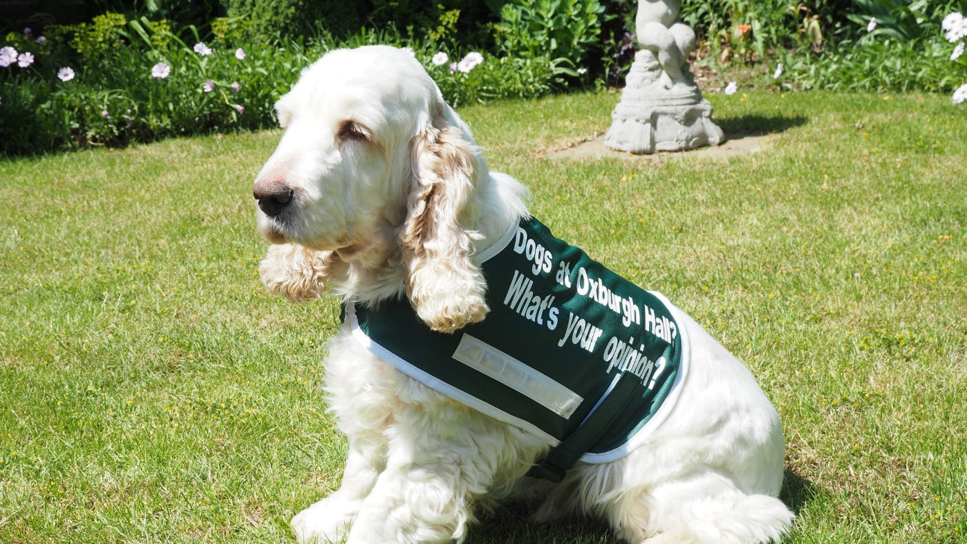 A dog wearing a coat, embossed with the words 'Dog walking at Oxburgh. What's your opinion?'