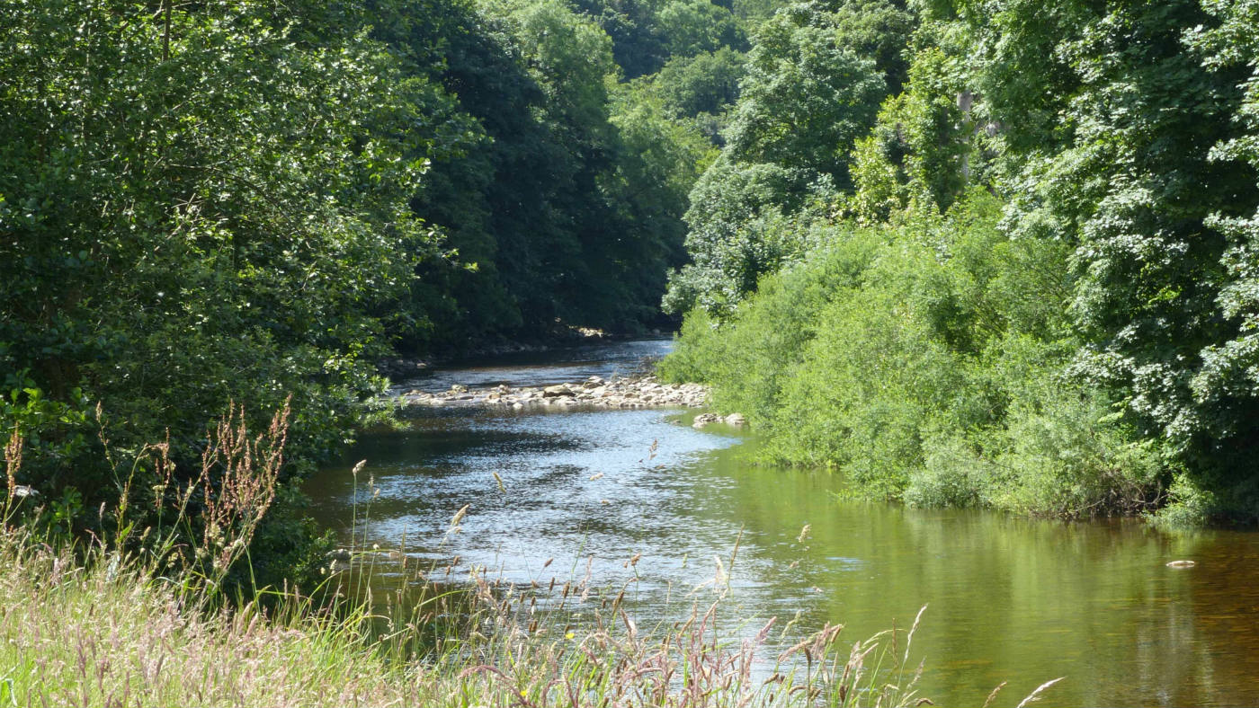 River Swale meandering through Hudswell Woods