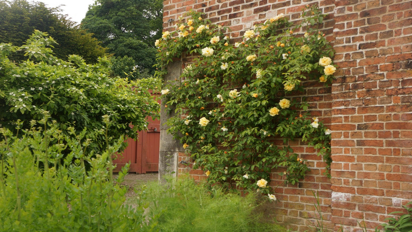 The rose garden at Clumber Park