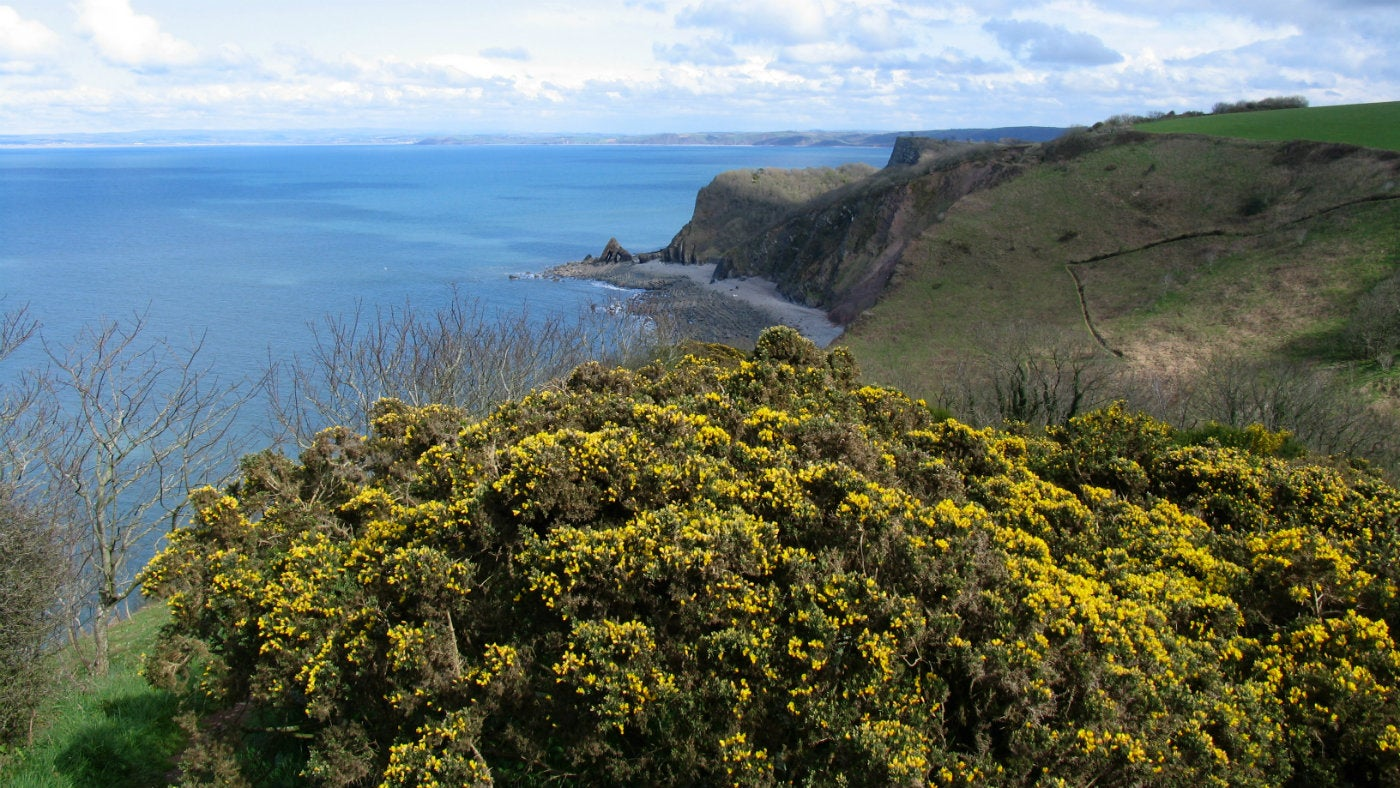 Coastal view with yellow gorse and blue seas